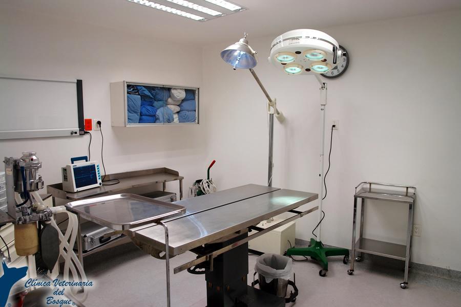 Instalaciones cl nica veterinaria del bosque for Mesa quirofano veterinaria