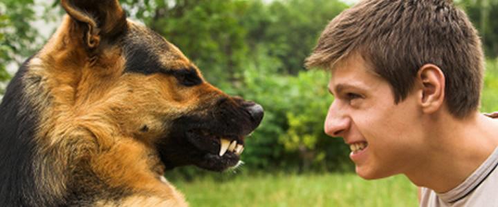 Agresion en perros